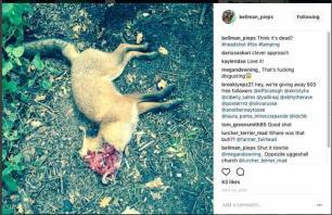 dead-fox-99112