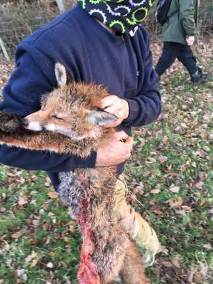dead-fox-99231