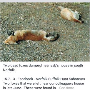 dead-fox-99232