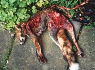 dead-fox-9932