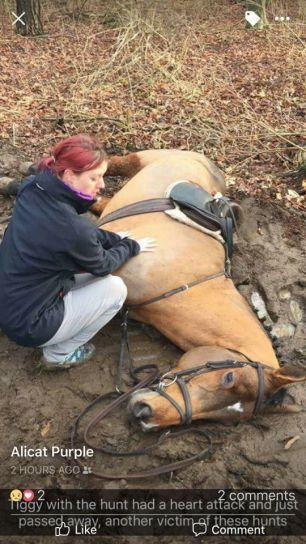dead-hunt-horse-662356