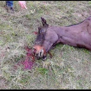 dead-hunting-horse-992745