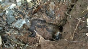 dead-shooting-animals-99234