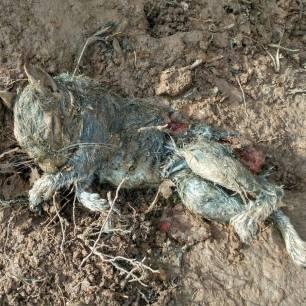 dead-shooting-animals-99235