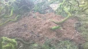 dens-and-setts-blocked-229345