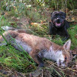 dog-and-fox-1777722