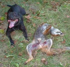 dog-and-fox-222888
