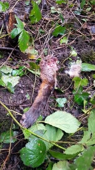 fox-kill-body-parts-36798550
