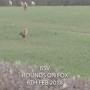 fox-running-from-hounds