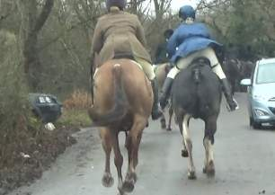 galloping-on-road-5082495