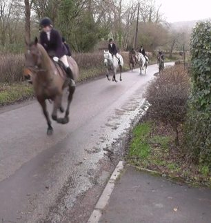 galloping-on-road-88376