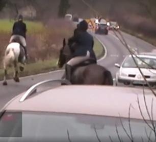 grafton-galloping-on-road-88234