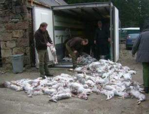 hare-killings-889956
