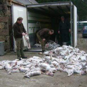 hare-killings-889956