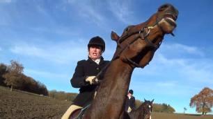 horse-cruelty-772635