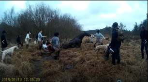 horse-in-bog-88211