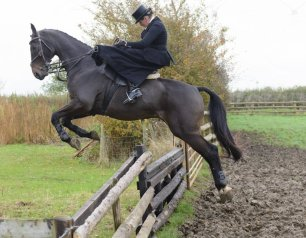 horse-jumping-out-of-bog