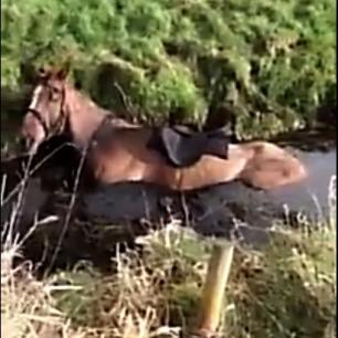 horse-stuck-in-water-ditch