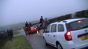 horses-pull-out-infront-of-cars