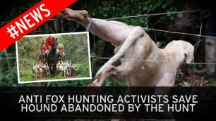 hound-saved-abandoned-by-hunt