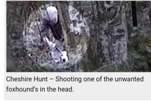 hound-shot-in-head-881121