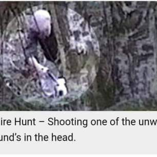 hound-shot-in-head-881121