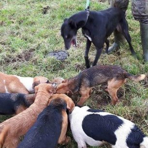 hounds-attack-883623