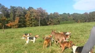 hounds-attacking-deer-49922