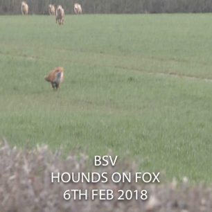 hounds-chasing-fox