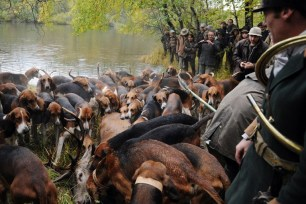 The pack gathers near a dead stag caught during a stag-hunting, on November 3, 2012 in Amboise. AFP PHOTO/ ALAIN JOCARD / AFP PHOTO / ALAIN JOCARD