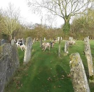 hounds-in-grave-yard-9911