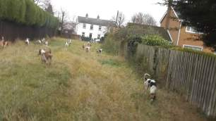 hounds-in-private-garden-993483