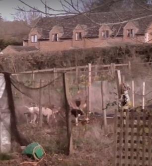 hounds-invade-allotment29-11-17