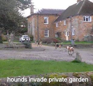 hounds-invade-garden-22345