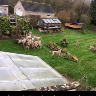 hounds-invade-garden-44777