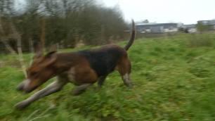hounds-invade-nature-farm