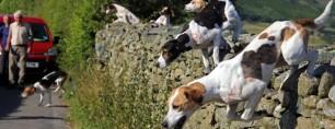 hounds-jumping-wall-77723