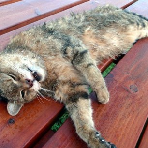 hounds-kill-pet-cat-002