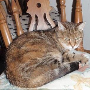 hounds-kill-pet-cat
