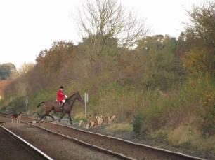 hounds-on-railway-line-33267