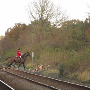 hounds-on-railway-line-33267