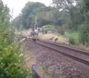 hounds-on-railway-line-somersetfox