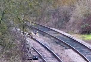hounds-on-railwayline-993647