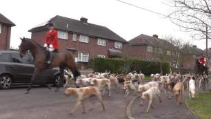 hounds-on-road-228345