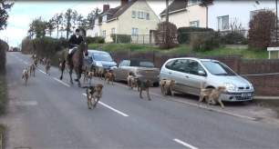 hounds-on-road-337234