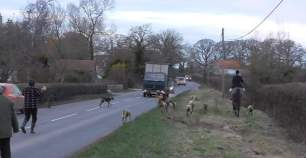 hounds-on-road-772834