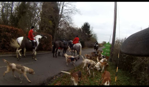hounds-on-road-7729