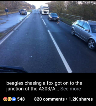 hounds-on-road-888111