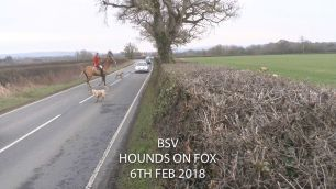 hounds-on-road-992345