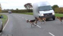 hounds-on-roads-22934